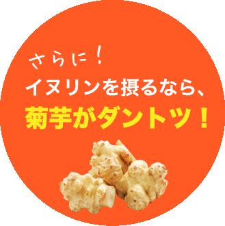 さらに!イヌリンを摂るなら、菊芋がダントツ!